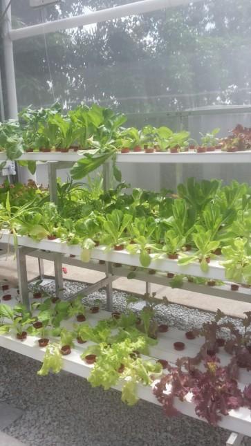 My Urban Growers - MUG2 (Customized design NFT System - 5ft onwards)