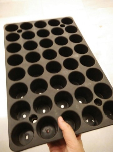 Seedling tray (40 holes)