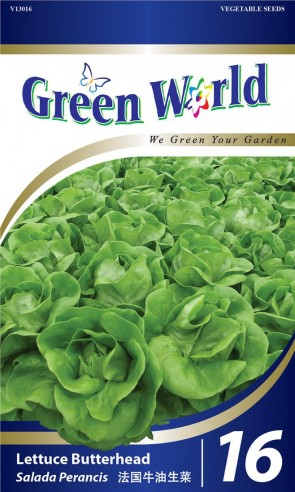 Green World Lettuce Butterhead