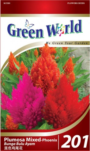 Green World Plumosa Mixed - Phoenix