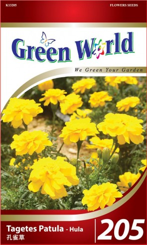 Green World Tagetes Patula - Hula