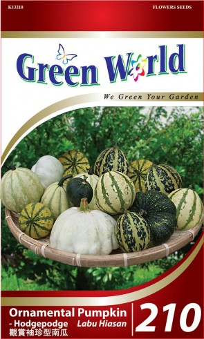 Green World Ornamental Pumpkin - Hodgepodge