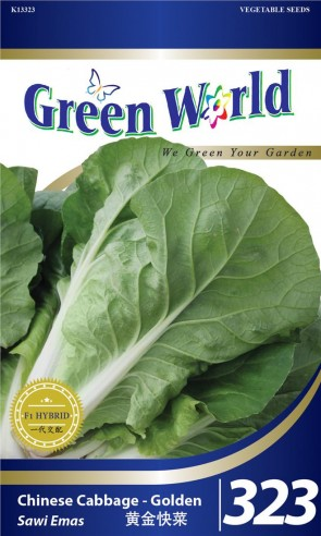 Green World Chinese Cabbage - Golden