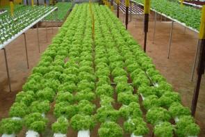 My Urban Growers - MUG3 (Horizontal NFT System - 5ft onwards)