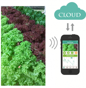 Design and Build Automation and IoT (Internet of Things) for Hydroponics/Agriculture
